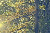 Blattgold by Licht und Mystik des Nordens