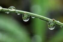 Dewdrops by Licht und Mystik des Nordens
