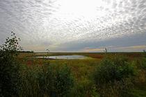 Im Sumpf by Licht und Mystik des Nordens