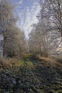 Winter Wonderland by Licht und Mystik des Nordens