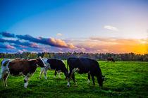 Lichtspiele auf der Kuhwiese von Dennis Stracke