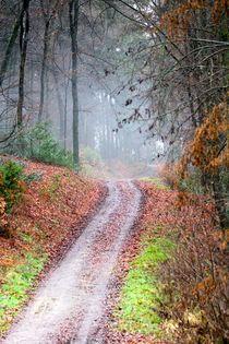 Weihnachtswanderung, leider ohne Schnee by © Ivonne Wentzler