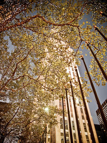 Rockefeller Plaza Christmas by Darren Martin
