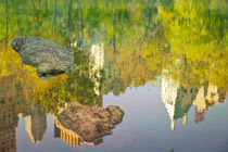 Central-park-reflection-2-copy