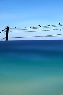 CRETAN SEA & BIRDS I by Pia Schneider