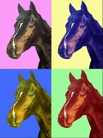 Pferd-pop