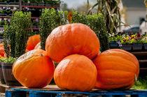 pumpkins at a country farm display von digidreamgrafix