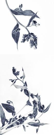 Northern Bluebells (Hochformat) by Priska  Wettstein
