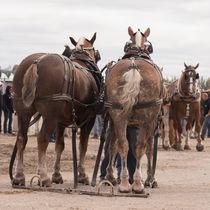 Horse-pull-img-4835