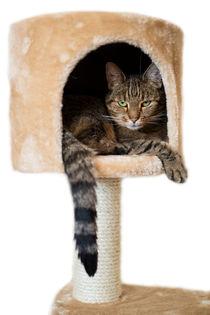 Katze in der Höhle von fotografie-von-hein