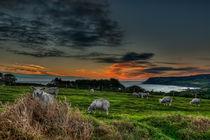 Sunrise over Robin Hoods Bay by Steve H Clark Photography