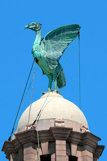 Liver Bird by Steve H Clark Photography