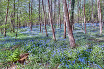 Bluebells by Steve H Clark Photography