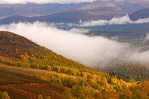 Glenmore Forest and the Cairngorms by Louise Heusinkveld