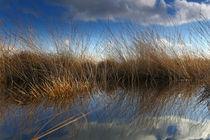 Im Recker Moor by Jens Uhlenbusch