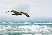 Pelikan | Pelican von mg-foto