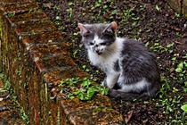 Kätzchen | Kitten von mg-foto