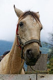 Pferdekopf | Horsehead by mg-foto