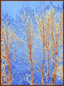 Winter-cottonwoods-abstract