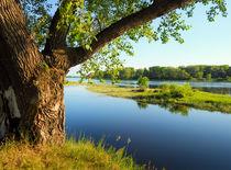 Big tree on the bank of the river von larisa-koshkina