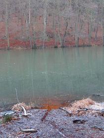 Die Farben des Waldes von Antje Püpke