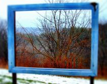 Nature Framed by Sabine Cox