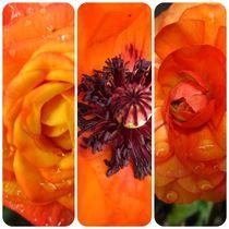 Orange Collage by Sabine Cox