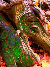 Roots, in colour by Sabine Cox