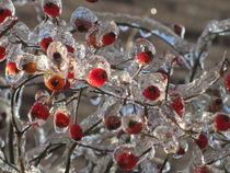 Frozen Rosehips by Sabine Cox