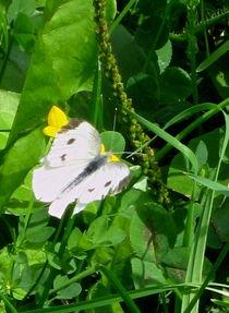 White Butterfly von Sabine Cox