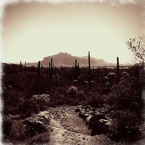 Arizona Desert by Sabine Cox