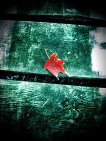 Maple Leaf by Sabine Cox