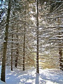 Golden Winter Light by Sabine Cox