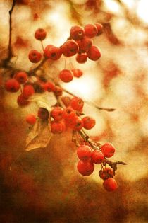 Crab Apples In Sepia by suzanne powers