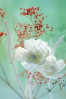 Weiße Rosenblüten Stillleben von Tanja Riedel