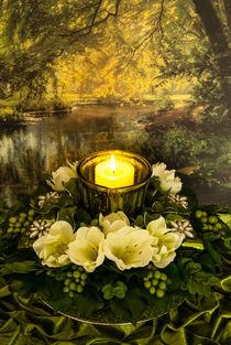 Ein Licht im Wald by Sina Meyer