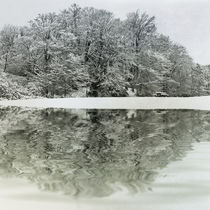 Winter Reflection von David Pringle