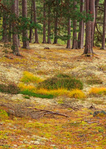 Lichens and Grasses on the Forest Floor by Louise Heusinkveld