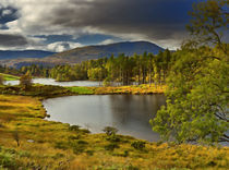 Tarn Hows, Lake District, Cumbria by Louise Heusinkveld