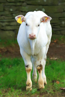 White Calf by Louise Heusinkveld