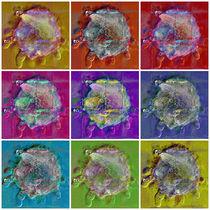 Sonnentierchen Collage by Zoia Luecht