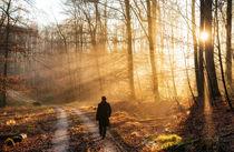 Spaziergang im Wald Naturpark Schönbuch von Matthias Hauser