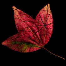 Leaf and Tree by Jon Woodhams
