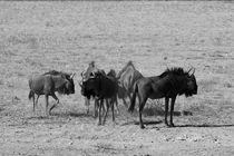 Namibia-tiere-6
