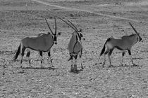 Namibia-tiere-9