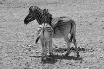 Namibia-tiere-10