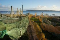 Fishing nets, Fredericia, Denmark von Stas Kalianov