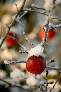 Winteräpfel von Heidrun Lutz