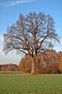 Herbst by camigwen78