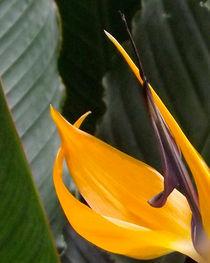 Détail d'une fleur von lorenzo-fp